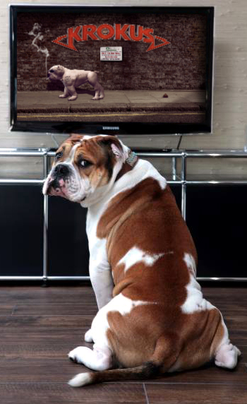 Da Doeg Watching The New Video - For Story Click On Picture