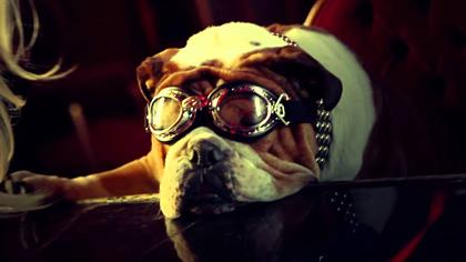 CLICK ON PICTURE TO GO TO LINK