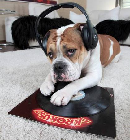 Da Dög Rocks! Click On Photo For Story